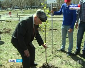 Сегодня во дворе Кызылского транспортного техникума волонтёры посадили саженец тополя из Волгограда